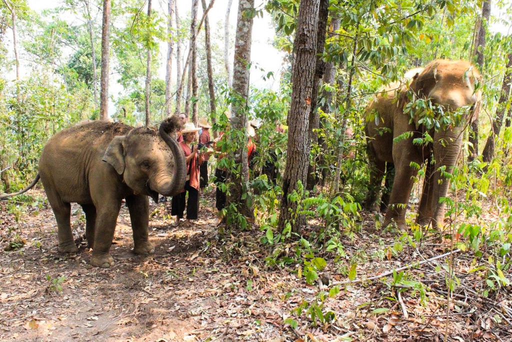The Elephant Nature Park In Chiang Mai, Thailand Changed My Life