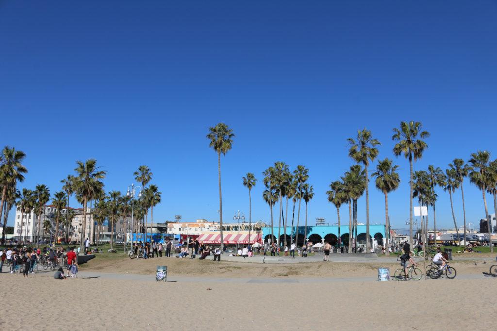 venice palm trees