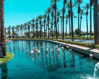 JW Marriott Desert Springs-7