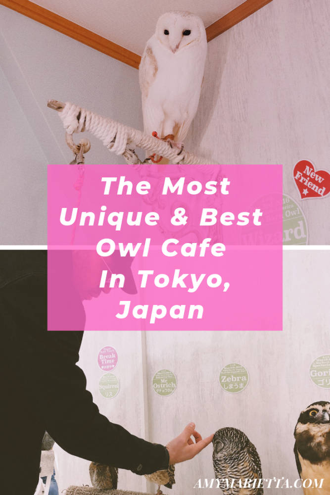 The Most Unique & Best Owl Cafe In Tokyo, Japan - @amy_marietta