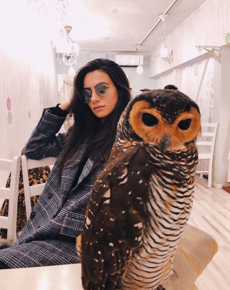 The Most Unique & Best Owl Cafe In Tokyo, Japan | Amy Marietta