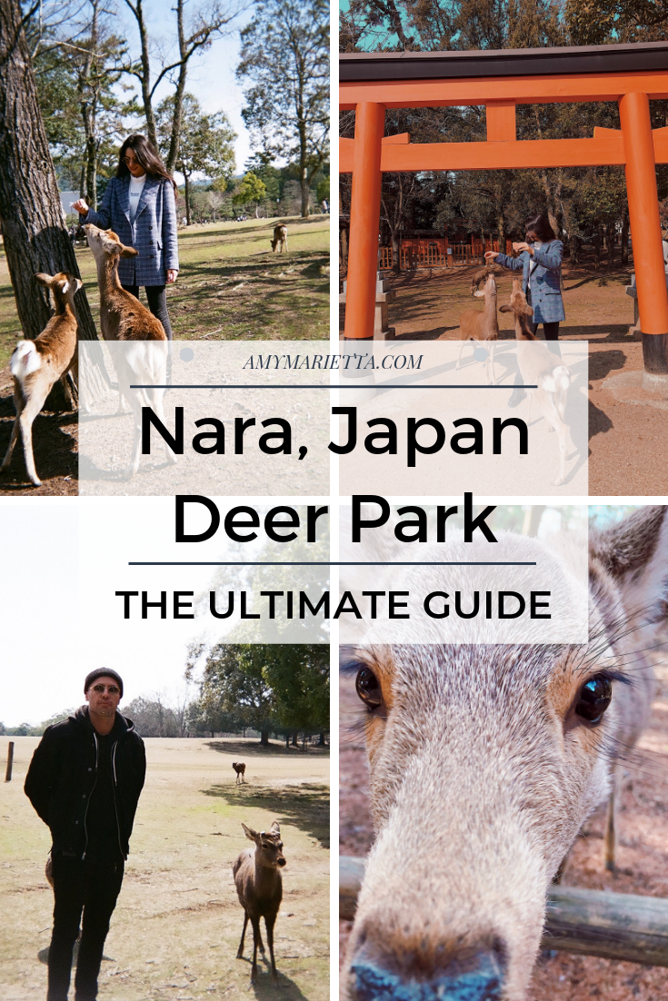 This Is The Best Kyoto Day Trip! Nara Japan Deer Park - Amy Marietta