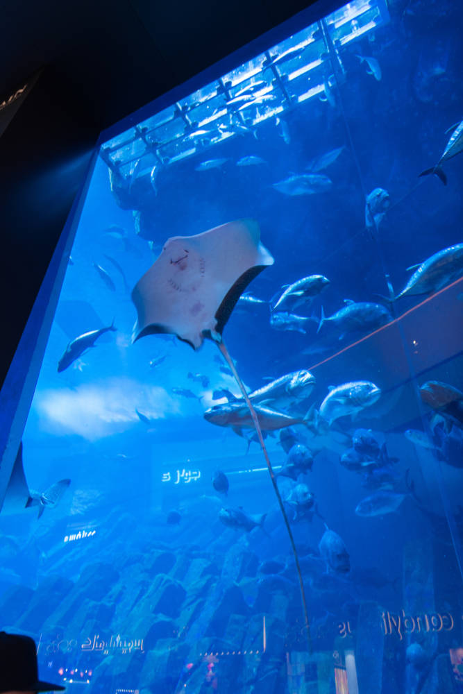 The Ultimate Dubai Travel Guide | Dubai Aquarium