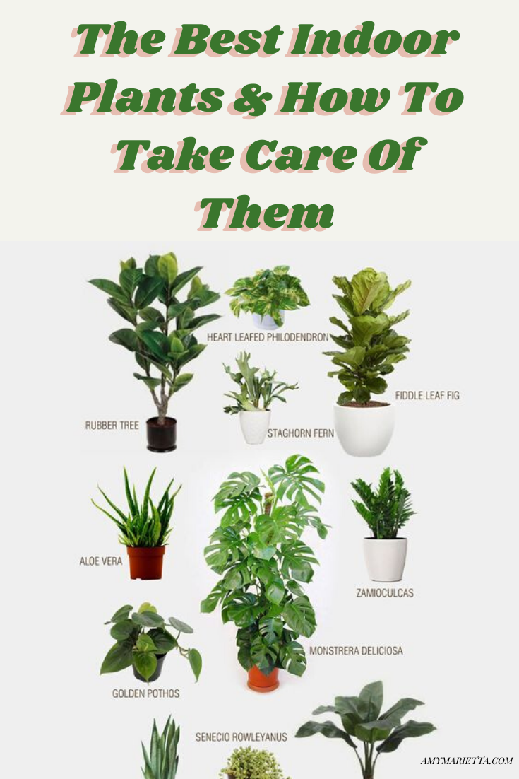 The Best Indoor Plants & How To Take Care Of Them